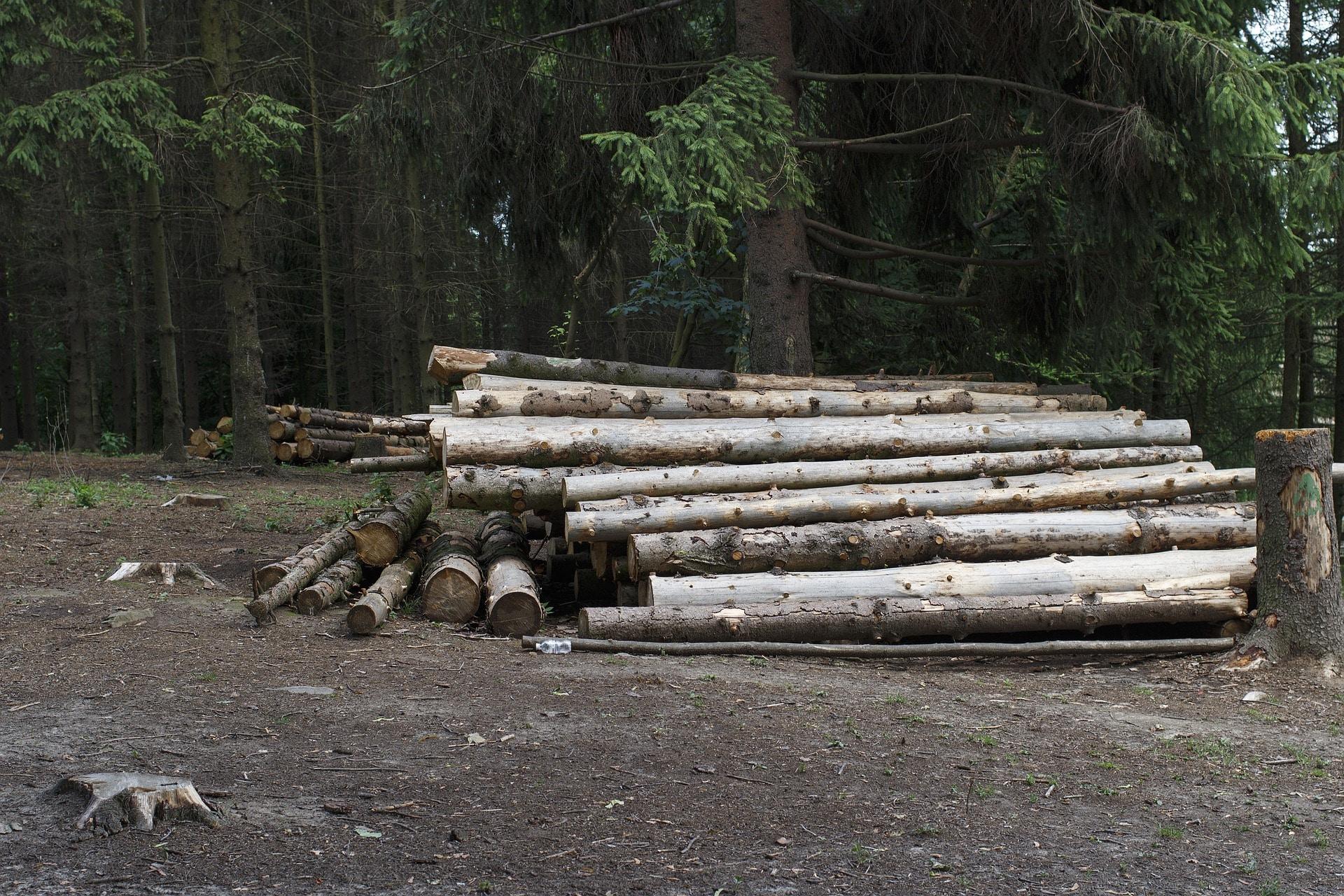 Transport bois